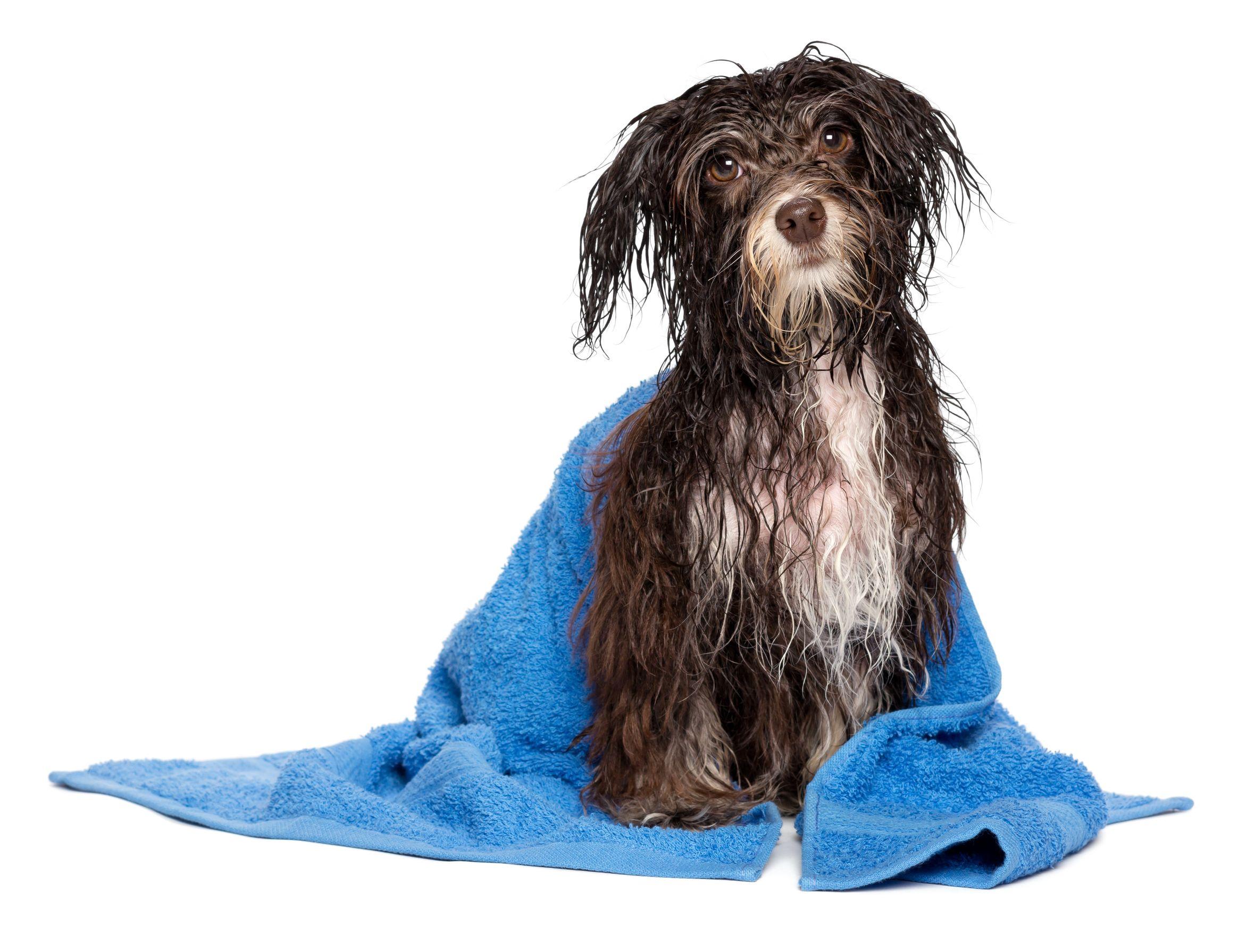 b2eb75f63870 Las altas temperaturas del período estival pueden afectar negativamente a  la salud de los perros. Al no poder transpirar, los canes están muy  expuestos en ...